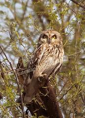 110632656 (TARIQ HAMEED SULEMANI) Tags: sulemani tariq tourism trekking tariqhameedsulemani winter wildlife wild birds nature nikon