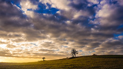 Sunrise on the hill (Andrzej Kocot) Tags: art adventure clouds sunrisemood landscapes sky grass landscape tree olympus mft m43 omd mzuiko microfourthirds sunrise fineart 1240mmf28 poland polska em10markii creative light andrzejkocot photography