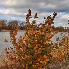 Herbst am Rhein bei Düsseldorf Wittlaer (Haeppi) Tags: herbst autumn fall düsseldorf wittlaer rhein rhine laub