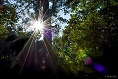 Lens Flare (sergionreis) Tags: portugal oporto garden nature flare lensflare trees serralvespark parquedeserralves serralves