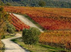 Chianti (antonella galardi) Tags: toscana siena chianti poggibonsi castellina 2018 autunno vigna vigneto wine vino serelle