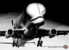 AIRBUS A330-743L BELUGA XL (MSN 1824) (PHOTOGRAPHE31 F-EGUT) Tags: msn1824 tls toulouse blagnac airport aeroport lfbo airbus avions aircraft france industrie avporn aerophotography avgeek aviation plane planeporn airbus airlines flight fly airplane planespotting instaaviation travel planespotter aviationlovers a330 a332 a330200 belugaxl a330743l freighter a330bxl fwbxl aib a33b avion