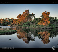 Reflections of the Setting Sun (tomraven) Tags: sunset summer trees water reflections lake aravenimage tomraven ducks q42018 olympus em1mk2