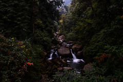 The Rammam river in Sirikhola ((Sharif Ahmed)) Tags: waterfall river jungle motion landscape flower