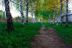 A Russian footpath (alexey & kuzma) Tags: russia tree fujifilm xt20 landscape paisaje rusia fujilove fujifilmglobal