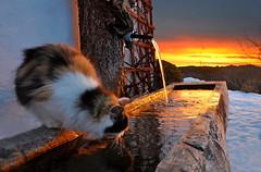 Im Morgenlicht (Mariandl48) Tags: sonnenaufgang katze brunnen wasser schnee morgenstimmung sommersgut wenigzell steiermark austria