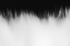 *** (donnicky) Tags: abstraction blackwhite cat closeup fluffy fur furry indoors macro minimalism nopeople pet publicsec лилу