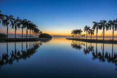 Dawns Early Light (Steven Hessler) Tags: wintersolstice sunrise deeringestate palmettobay biscaynebay southmiami royalpalms charlesdeering southflorida morning dawn stevenhessler canon60d
