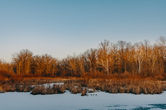 Frozen Wetland + Winter Sunset, Minnesota (Tony Webster) Tags: minnesota saintcroixstatepark stcroixstatepark frozen goldenhour ice snow statepark trees wetland winter