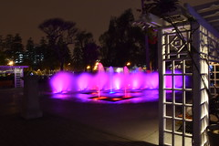 DSC_1114 (Andrei Hidalgo) Tags: colores noche agua arboles flores lima perú arte cultura espectaculo