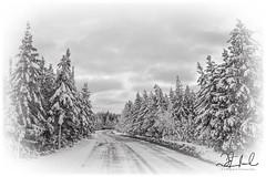 The Road, now more Frequently Travelled - B&W (D J England) Tags: djenglandphotography sigma24105mmf4dgoshsma douglasjengland brucepeninsula ontario dje canoneos5dmkiii southernontario djengland thebruce tobermory haybay