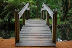 IMG_9866 (sarnovphoto) Tags: dandenong dandenongranges olinda victoria rainforest australia canon canon60d bridge lake water