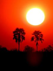Sunset (BaliDave2) Tags: botswana wildlife sunset africa 2018