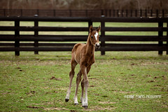 Kitty Kitty (Funtasian) Tags: horses equestrian equine snow cold field paddock barn filly foal babyanimals colt sky grass
