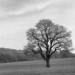 Deepest Leicestershire