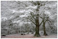 Clairière givrée (Pascale_seg) Tags: hiver winter forêt arbre tree sousbois clairière moselle france lorraine grandest nikon neige snow neve givre frost white blanc bianco paysage landscape