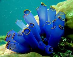 Moalboal Diving (Hai-Ray) Tags: canon powershot g16 2019 diving tauchen scubadiving unterwasser underwater salzwasser saltwater cebu moalboal philippines philippinen magicislanddiveresort