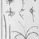 This image is taken from Elémens de botanique, ou Méthode pour connoitre les plantes, par Pitton de Tournefort. Edition augmentée de tous les supplémens donnés par Antoine de Jussieu; enrichie d' thumbnail