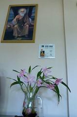 Flower & Flower Pot (H.S.Narang) Tags: flower flowers bloom blossom floweringplants plants flowerpot