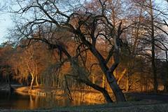 Am Gundbachweiher (nordelch61) Tags: deutschland hessen heimat naturschutzgebiet mönchbruch gundbach gundbachwiesen gundbachweiher mörfeldenwalldorf winter sonne bäume zweige blätter wasser himmel nachmittag licht