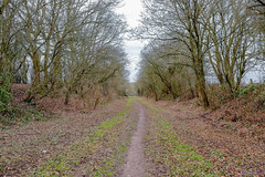Offchurch Greenway 20th January 2019 (boddle (Steve Hart)) Tags: offchurch greenway 20th january 2019 royalleamingtonspa england unitedkingdom gb steve hart boddle steven bruce wyke road wyken coventry united kingdon great britain canon 5d mk4 6d 100400mm is usm ii 2470mm standard wild wilds wildlife life nature natural bird birds flowers flower fungii fungus insect insects spiders butterfly moth butterflies moths creepy crawley winter spring summer autumn seasons sunset weather sun sky cloud clouds panoramic landscape