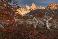 Patagonia in Afternoon Light (Iurie Belegurschi www.iceland-photo-tours.com) Tags: autumn fall colours colors foliage trees leaves deadtrees mountain mountains mountainrange peaks snowcapped golden sunlight light patagonia argentina chile southamerica adventure beautiful daytours dreamscape earth enchanting extremeterrain extreme fineart fineartlandscape fineartphotography fineartphotos guidedphotographyworkshops guidedphotographytour icelandphototours iuriebelegurschi landscape landscapephoto landscapes landscapephotos landscapephotography nature outdoor outdoors orange phototours phototour workshops summer serene sky tours travel travelphotography tree view valley workshop montefitzroy fitzroy
