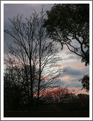 bos-early-walkaroind-1070687-141118 (Peadingle) Tags: early morning burnhamonsea somerset