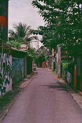 Cristina Takes a Walk (The Foreign Fox) Tags: analog analogue film 35mm street streetphotography streetart tree road graffiti travel summer summervibes itsalmostwinter grey sky city urban