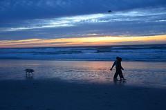 Dog walk at dusk (afagen) Tags: california pacificgrove asilomarstatebeach montereypeninsula asilomar beach pacificocean ocean sunset dusk dog