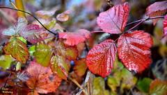 Herbstblätter (diwe39) Tags: herbstblätter karlstadt winter201819