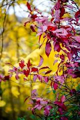 In balance (=Я|Rod=) Tags: autumnfall