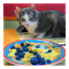 The Breakfast Assistant (Timothy Valentine) Tags: 2018 assistant breakfast quinnomannion happycaturday 1218 datesyearss home cat eastbridgewater massachusetts unitedstates us