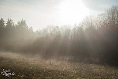 Autumn Haze III (judithrouge) Tags: haze fog mist trees forestedge rays raysoflight nebel dunst bäume waldrand strahlen lichtstrahlen morgenstimmung morning mood morningmood morgens morgennebel stimmung