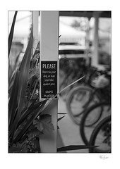 Please (radspix) Tags: mamiya 645 1000s sekor 55105mm f45 ilford hp5 plus bergger pmk pyro