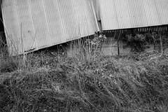 Corrugations (cybertect) Tags: callington carlzeissmmdistagont28mmf28 cornwall frogwellroad sonya7ii barn blackwhite blackandwhite corrugatediron farm monochrome