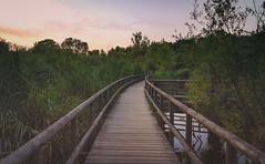 The way into the nature ... (Lichtbursche) Tags: rundweg holzbrücke natur wandern grün waren müritz woodenbridge nature hiking green outside outdoor schilf weg reed way s8 mecklenburgvorpommern deutschland germany sonnenuntergang sunset