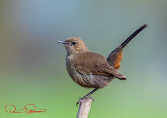 750_1499s (TARIQ HAMEED SULEMANI) Tags: sulemani tariq tourism trekking tariqhameedsulemani winter wildlife wild birds nature nikon