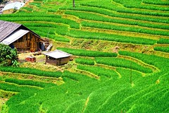 Surroundings of Sa Pa, mountains and valleys, green rice terraces, Vietnam