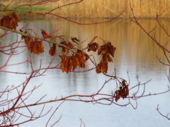 Farben des Winters am Teich (germancute) Tags: outdoor nature park plant pond thuringia thüringen tree teich