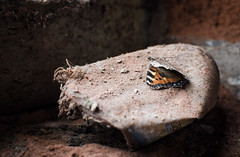 Fading colours (Leebobabyjnr) Tags: butterfly nikon d7200 decay sheffield sipelia works industrial