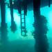 Flinders Pier Underwater-9