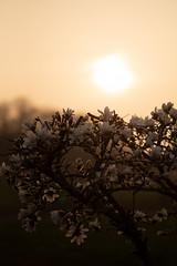 (matthiasolschewski) Tags: frühjahr goldenestunde nikkorais10525