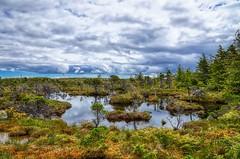 Haidagwai Swamp (orkomedix) Tags: canon 6d 24105f4l swamp canada haida gwaii island sky water reflexion green bog trees hike trail white creek