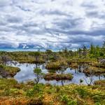 Haidagwai Swamp thumbnail