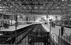 Glasgow central station Scotland (Dave Russell (1 million views thanks)) Tags: glasgow central station scotland city bw black white mono monochrome architecture rail railway railroad track tracks platform platforms train transport hub passenger commuter canon eos eos700