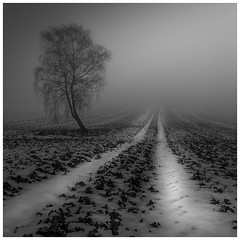 Der Weg ins nichts (Velby) Tags: landschaft natur winter schnee weg nebel velbert blackwhite landscapes fog foggy nature tree blackandwhite bw trees