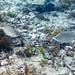Flinders Pier Underwater-18