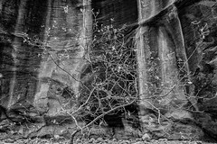 The Narrows Trail (Colin Campbell Photography) Tags: zionnationalpark blackandwhite monochrome narrows