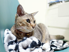 Bill the princess (Steve only) Tags: olympus pen ep5 mzuiko digital 17mm 118 f18 1718 cats bill