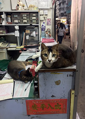 Shop Cats (cowyeow) Tags: cute shop china chinese asia asian city kowloon hongkong 香港 street cat pet funny urban store composition lazy